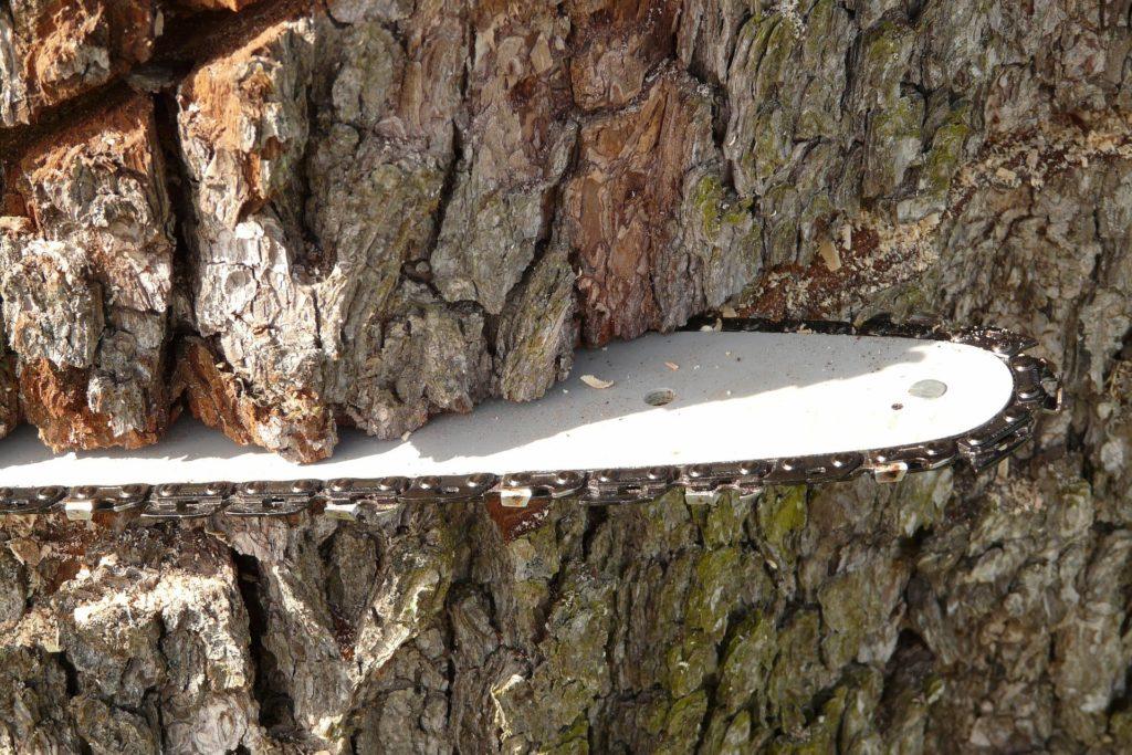 Lame de tronçonneuse dans un tronc